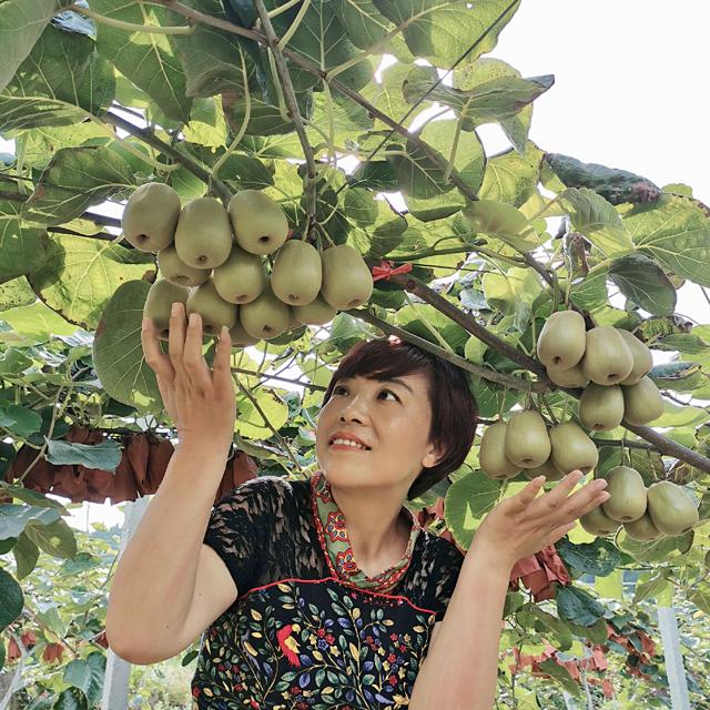 狝猴桃苗(红心/黄心)   品种纯